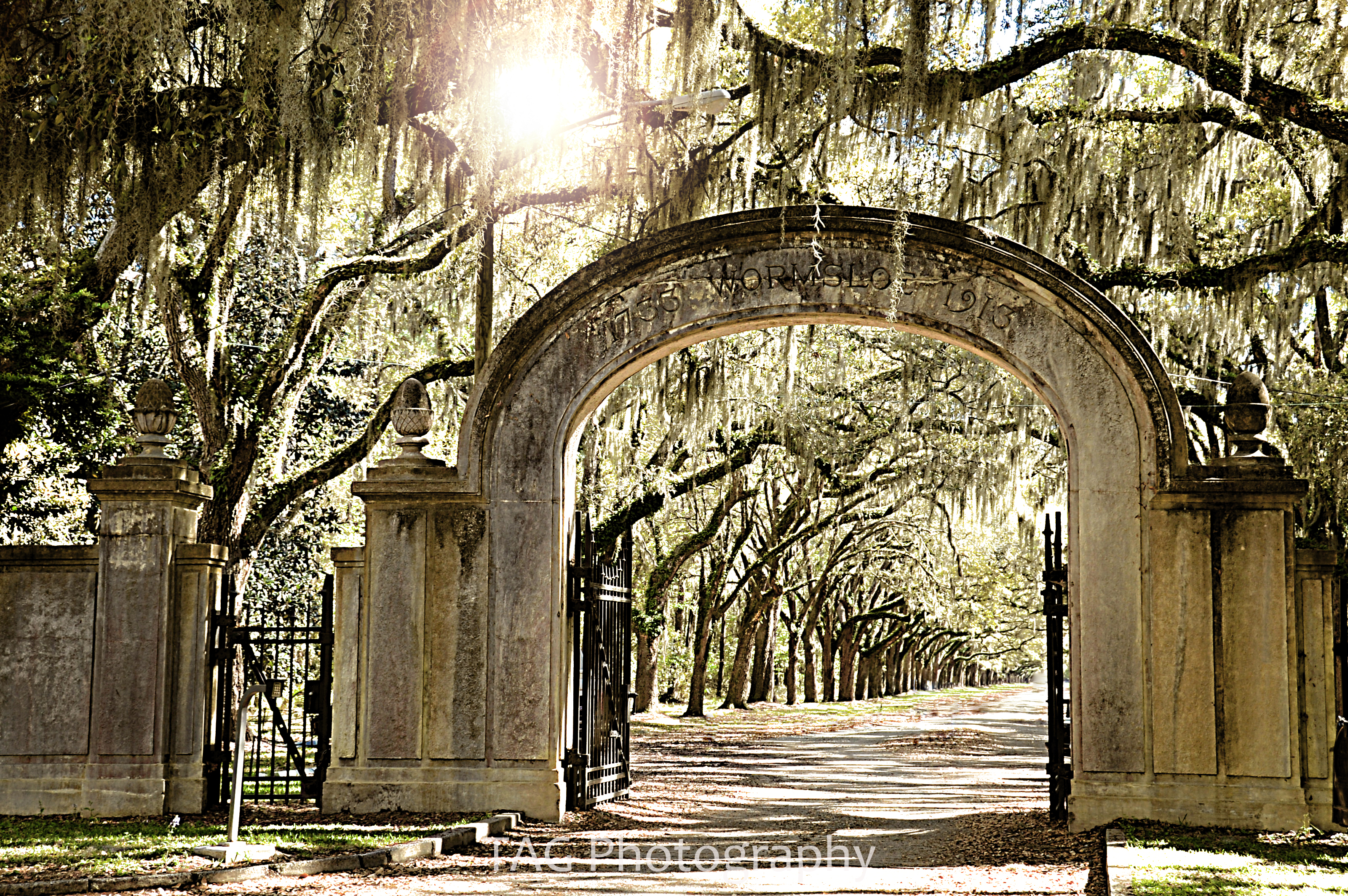 Wedding Photographer In Savannah GA